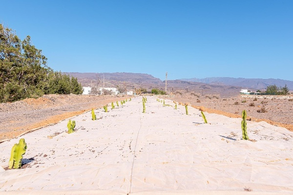 Ecoener reforesta el parque eólico El Rodeo con medio millar de plantas autóctonas
